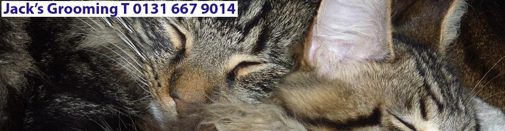 Smarter Pets By Jacks Grooming Now Open At Buckstone Terrace Eh10 6qa Cat Groomers Edinburgh